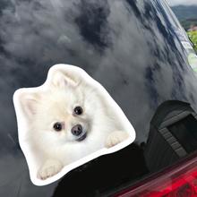 うちの子の写真でつくる オーダーメイド ひょっこり犬シールセット