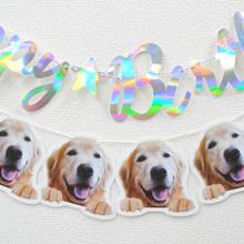 レトリーバー×ディアカーズコラボ うちの子の写真でつくるひょっこり犬ダイカットポストカードセット